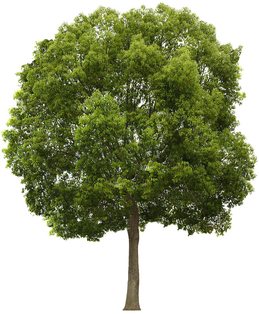 Tree Collection Clipart Png #722.