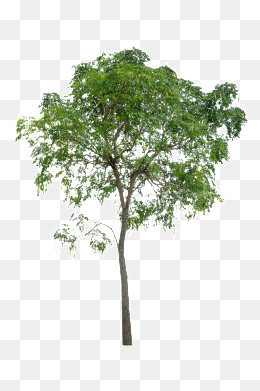 Trees Png Free & Free Trees.png Transparent Images #17164.