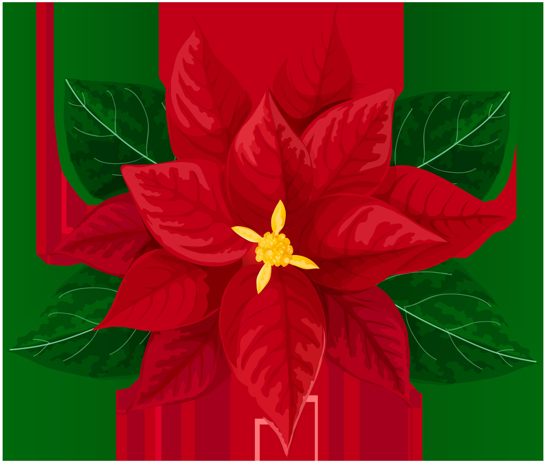 Poinsettia Transparent Clip Art Image.