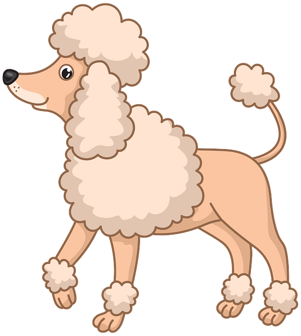 Poodle clipart. Free download..