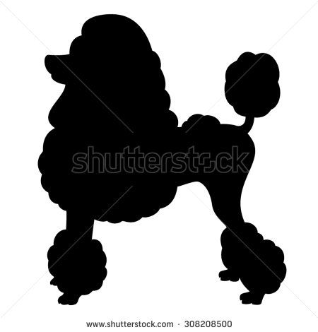 Poodle purebred dog with Continental clip standing in side view.