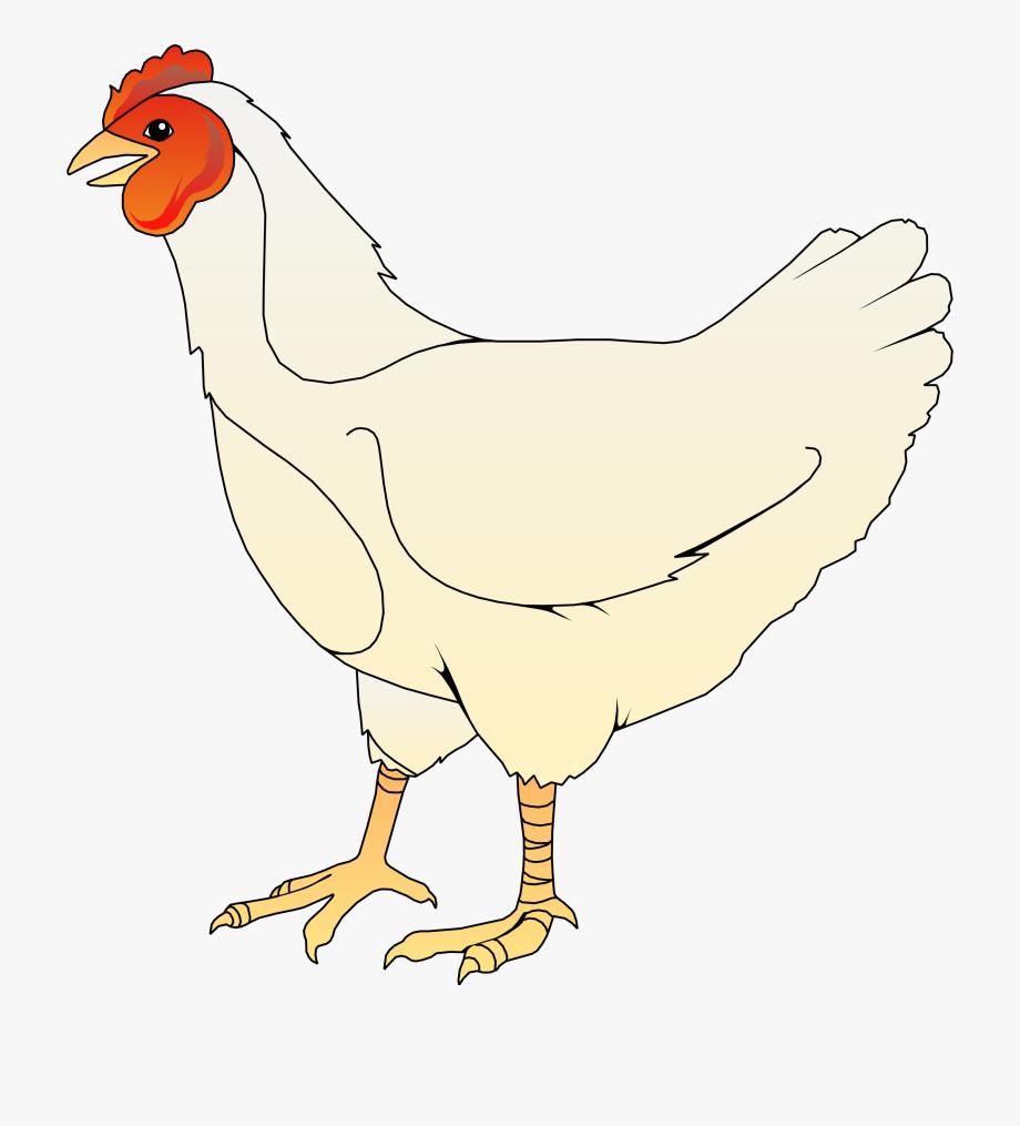 Broiler Chicken Clipart.
