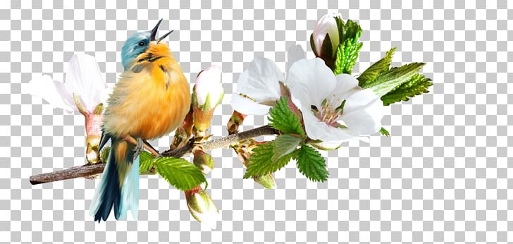 Bird Portable Network Graphics Psd Adobe Photoshop Psp Tubes PNG.
