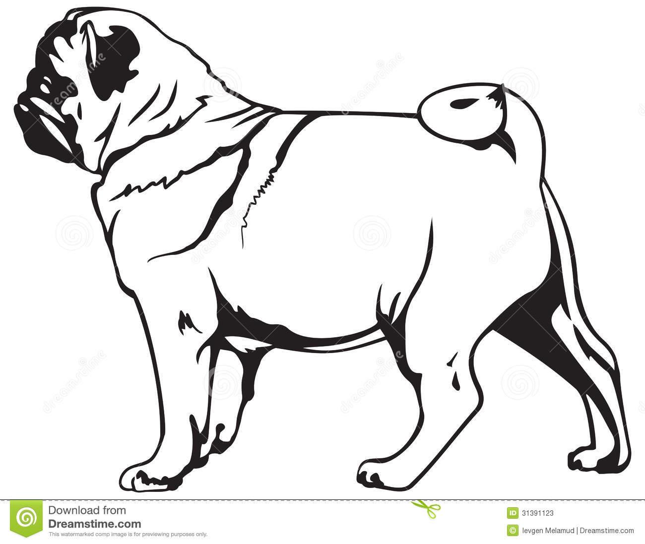 Pug Dog Breed Stock Photos.