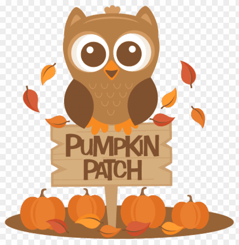 cute pumpkin patch PNG image with transparent background.
