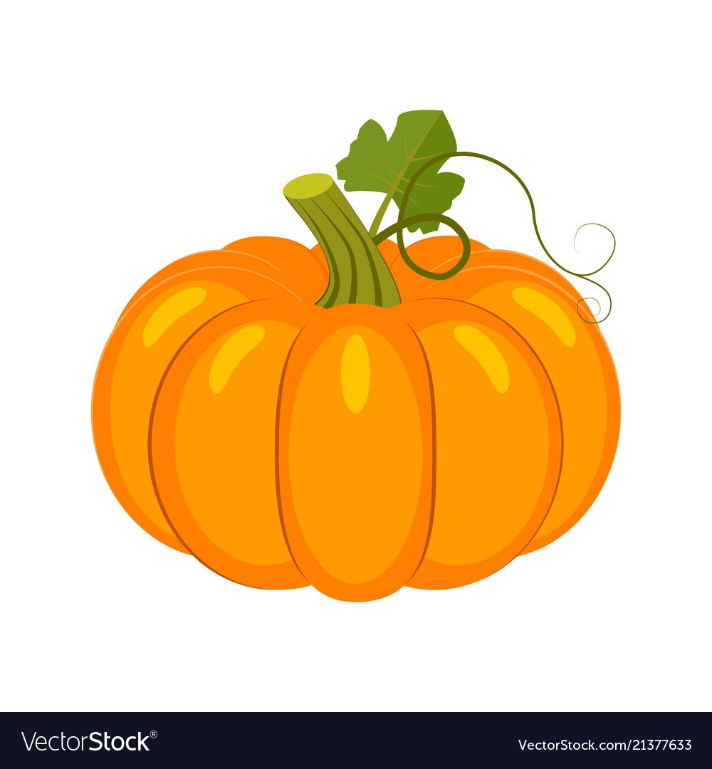 Colorful pumpkin isolated on Royalty Free Vector Image.