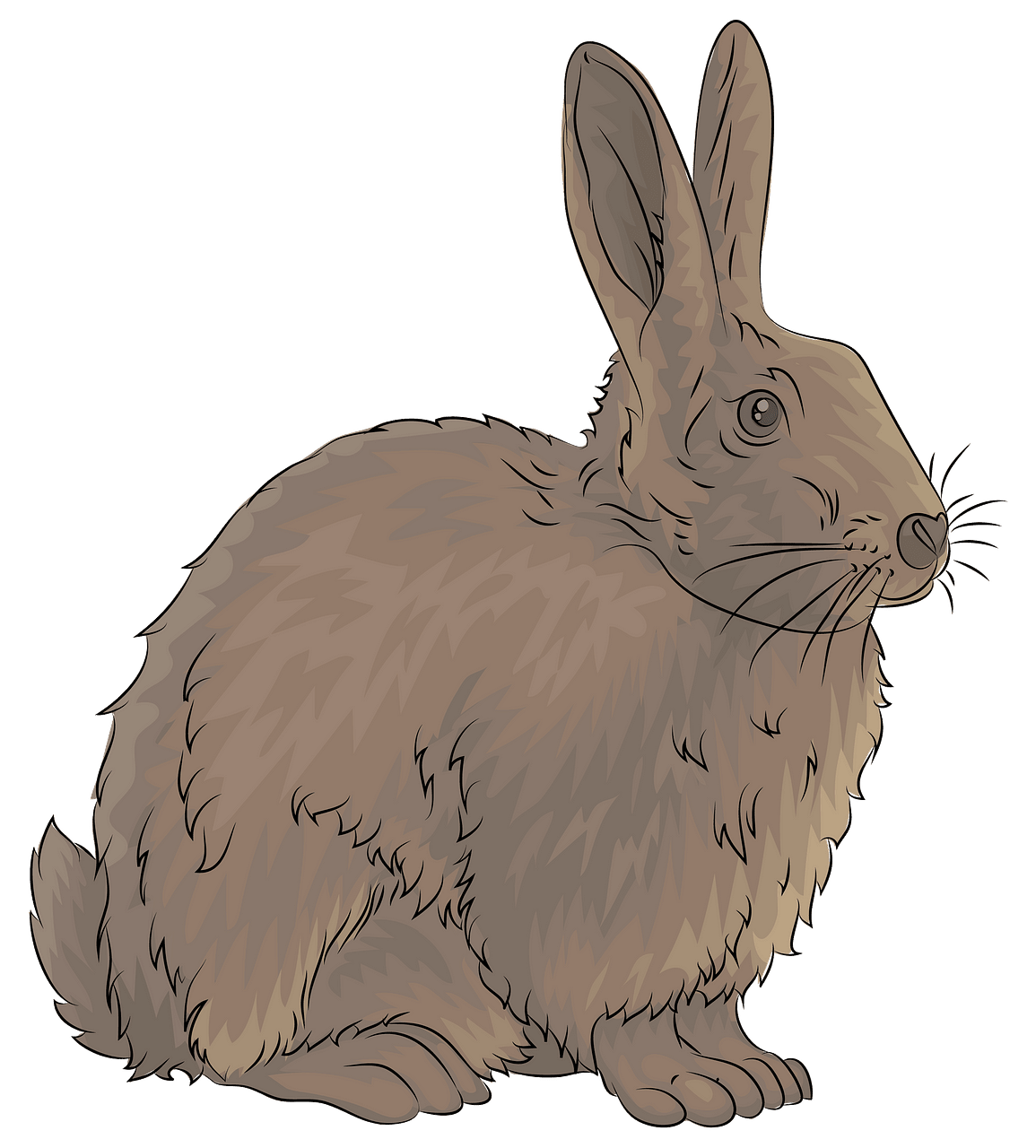 Rabbit clipart. Free download..