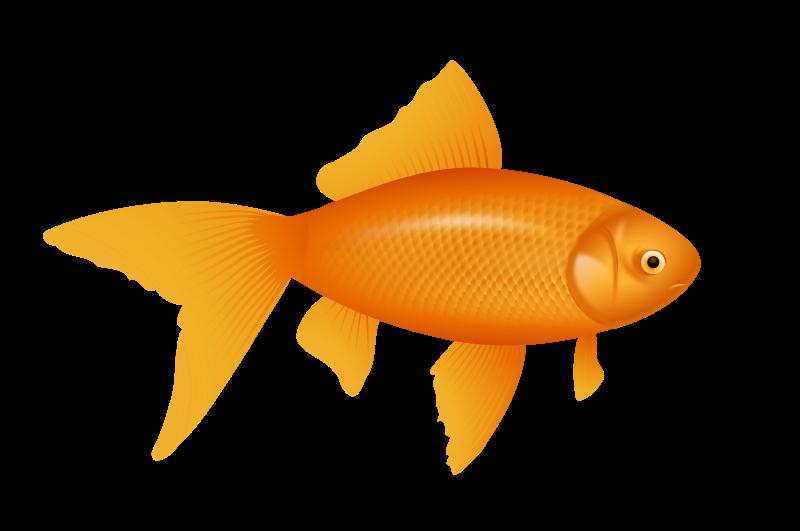 Free Realistic Goldfish Clip Art.