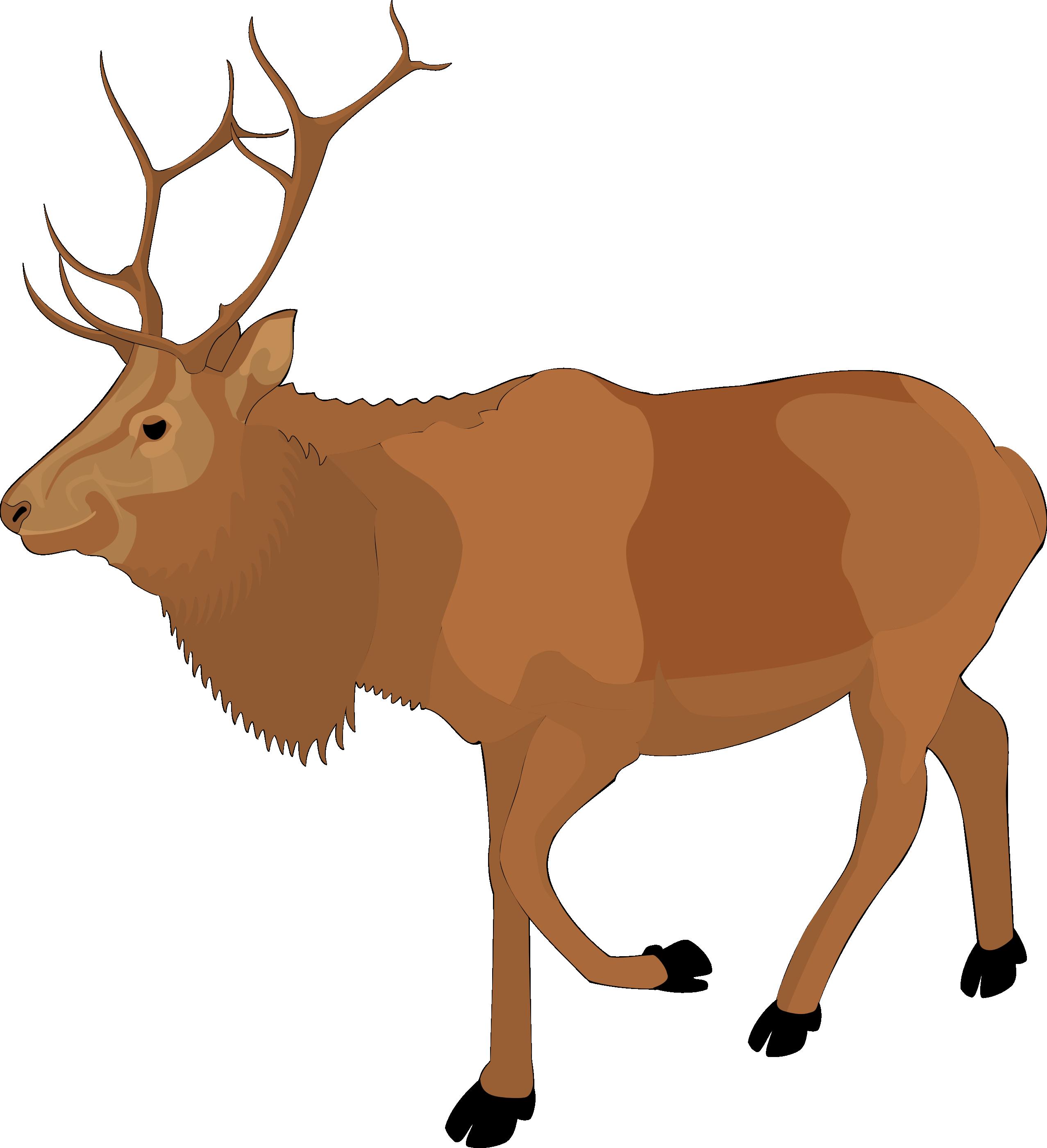 Clip art reindeer clipart.