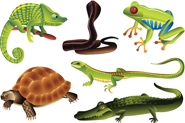 Best Reptile Illustrations, Royalty.