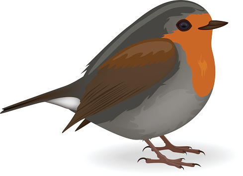 909 Robin free clipart.