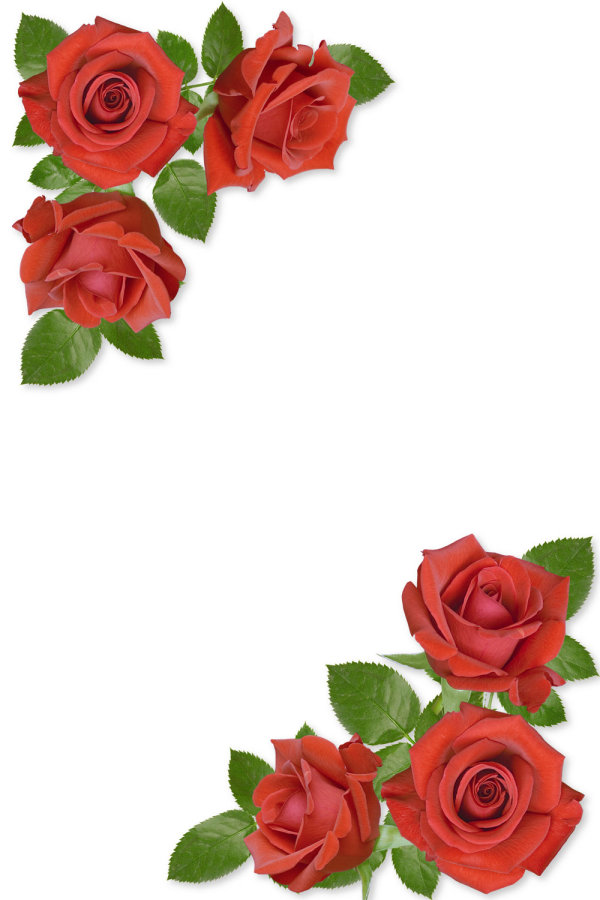 Free Rose Flower Borders, Download Free Clip Art, Free Clip.