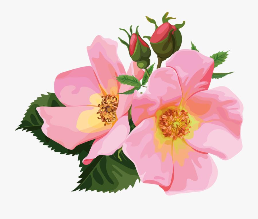 Rose Cliparts Transparent Floral.