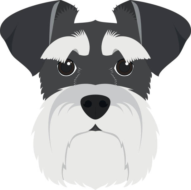 Best Schnauzer Illustrations, Royalty.