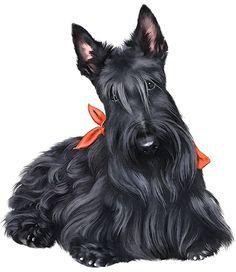 free scottish terrier clip art.