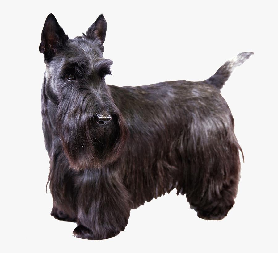 Scottie Dog Clipart.