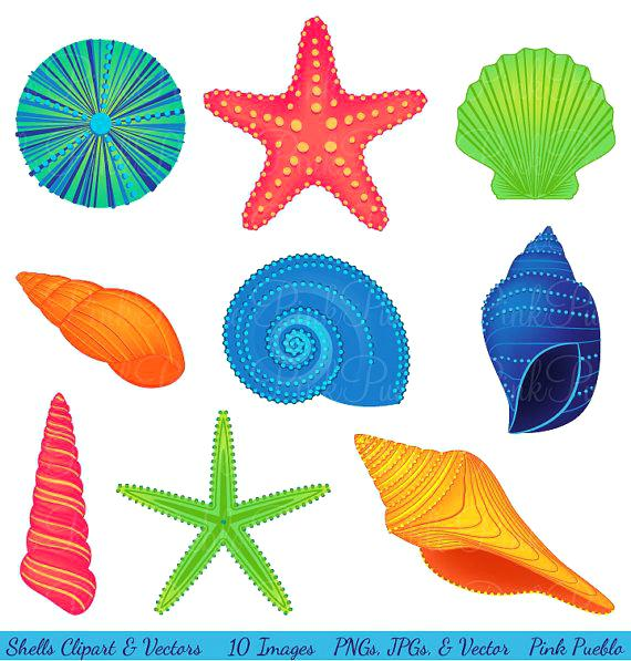 Free seashell clipart 2 » Clipart Station.