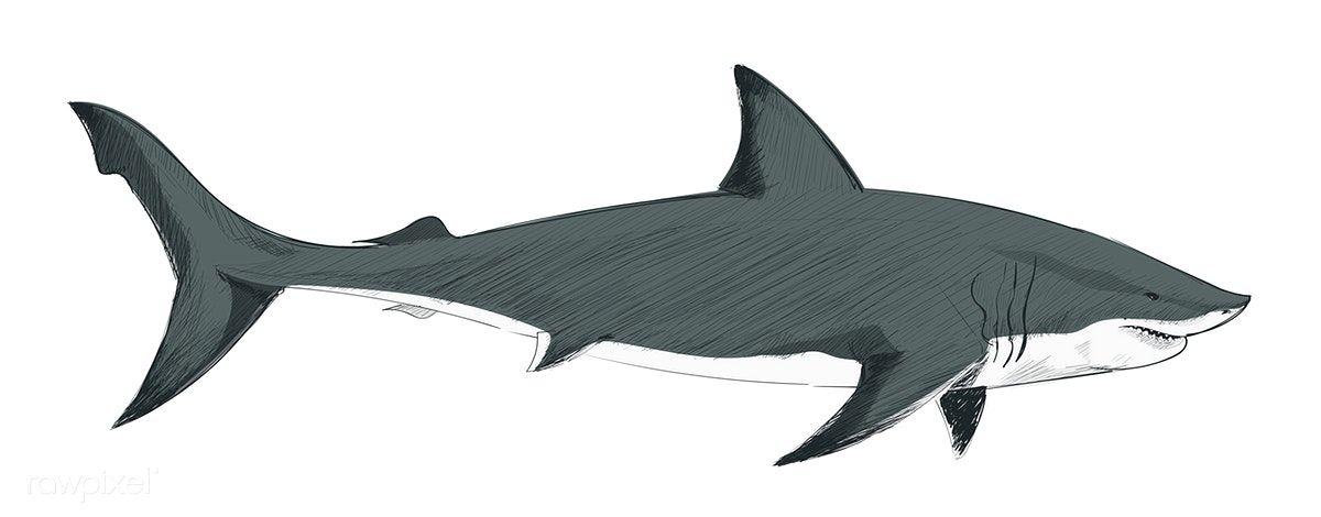 Free Clipart Shark.