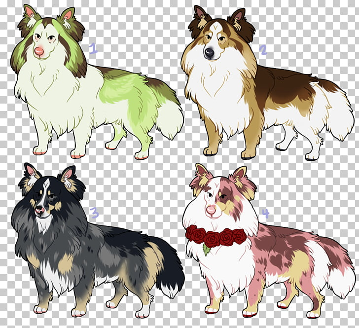 Dog breed Icelandic Sheepdog Rough Collie Shetland Sheepdog.