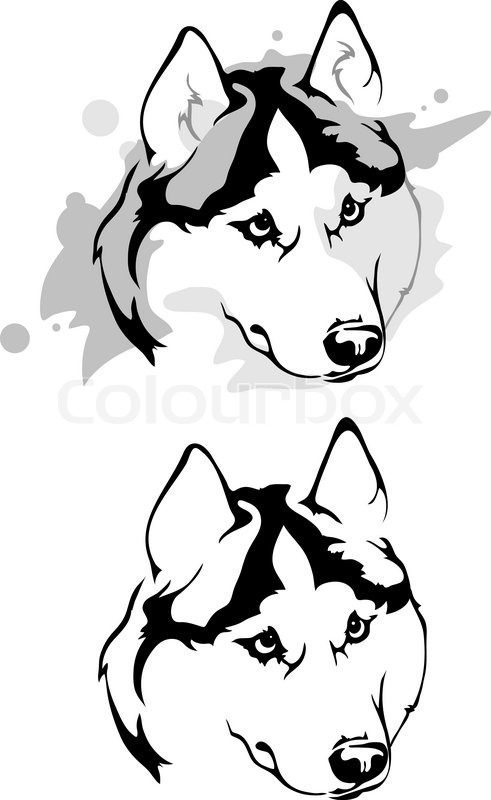 Download vector illustrations husky clipart Siberian Husky East.