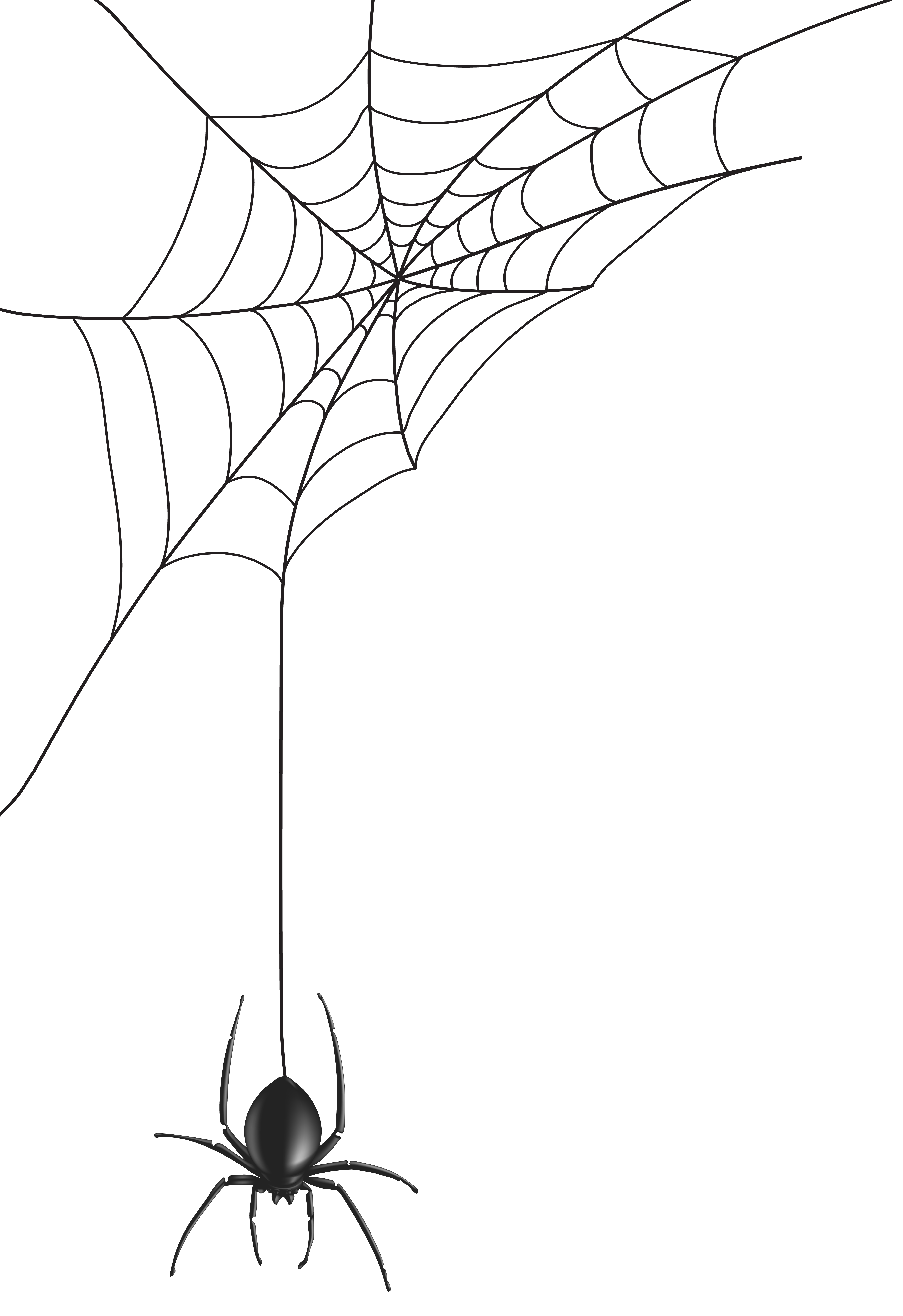 Spider Web PNG Clip Art Image.