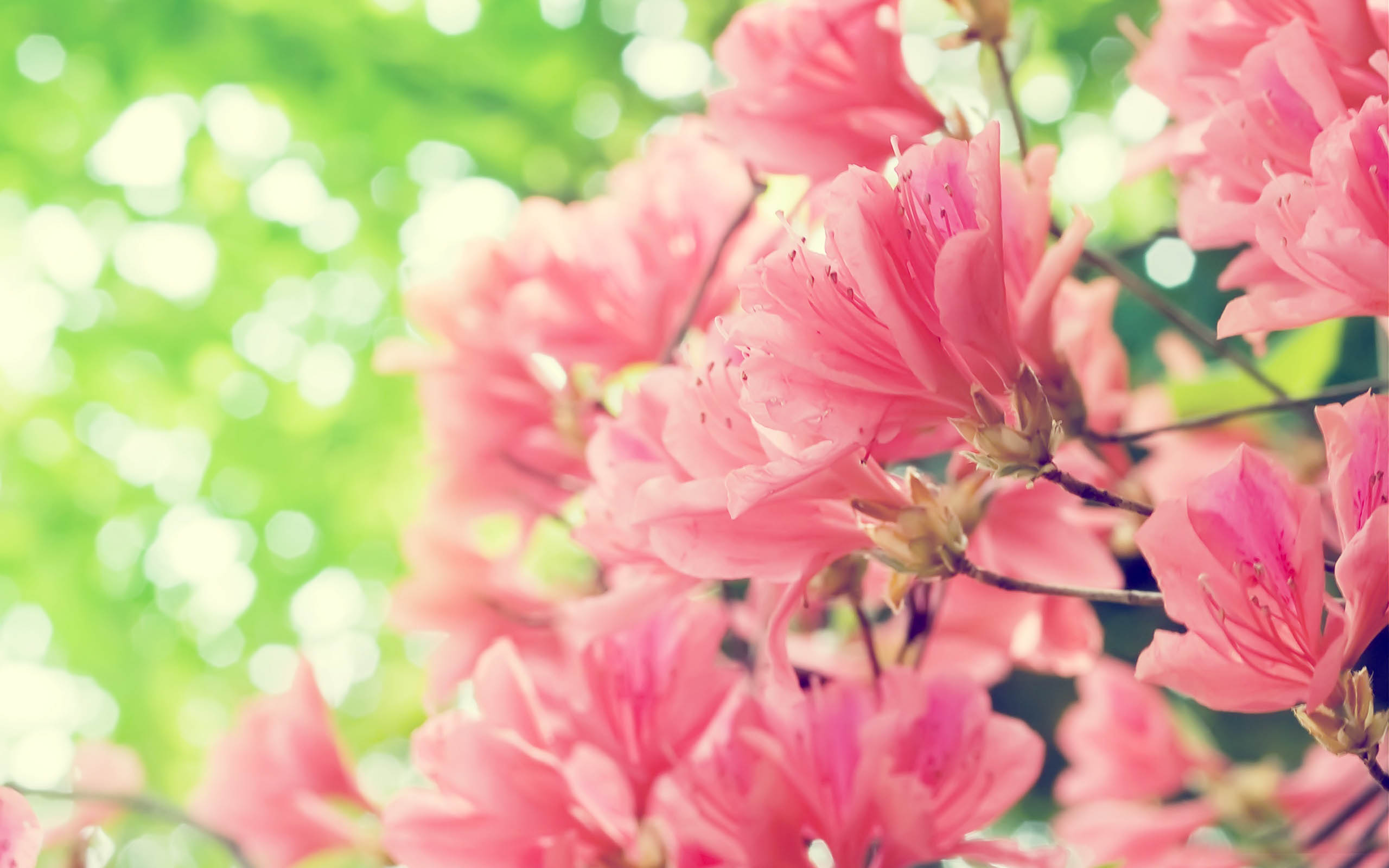 Free Spring Flower Pictures Clipground