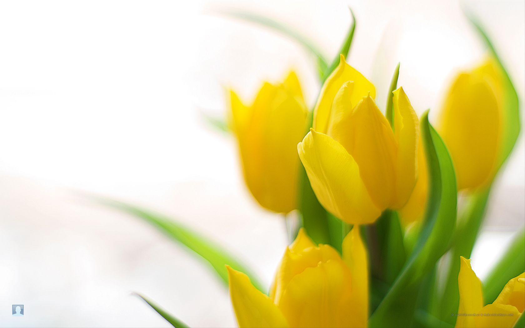 Spring Flowers Backgrounds Desktop.