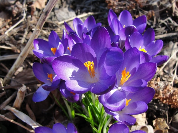 Spring flower images free stock photos download (13,425 Free stock.