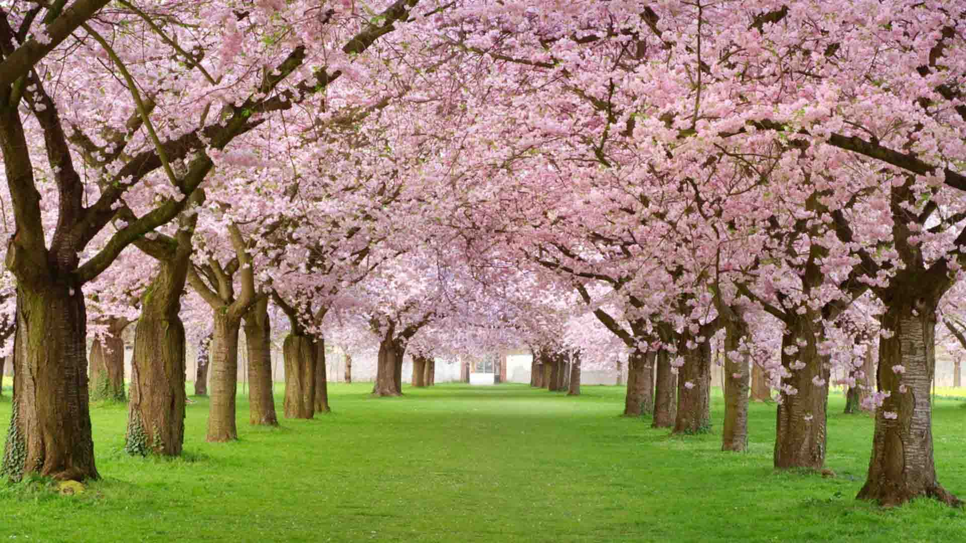 Spring Season Latest HD Wallpapers Free Download.