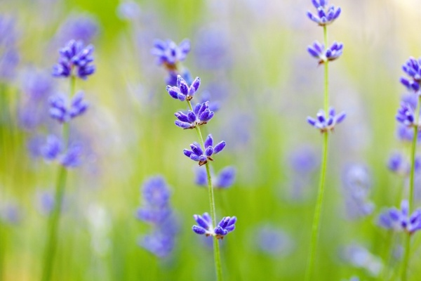 Spring background free stock photos download (12,514 Free stock.