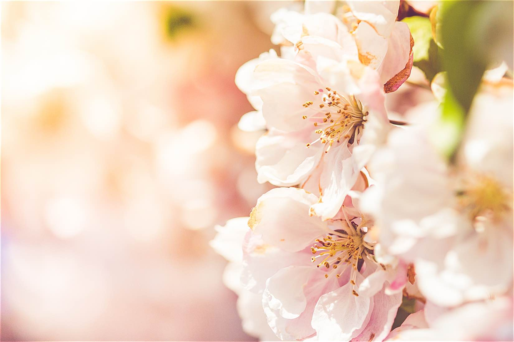 Wonderful Spring Blooms Free Stock Photo Download.