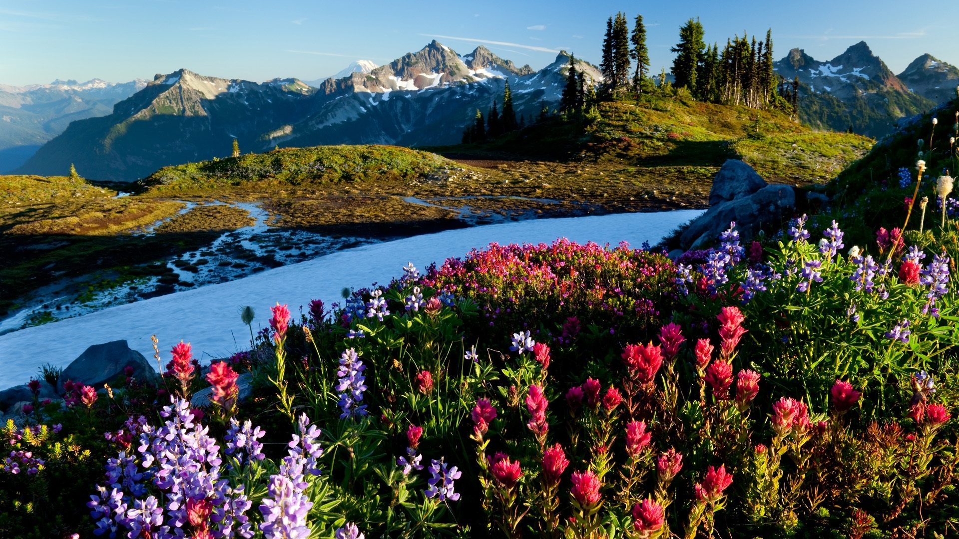 Beautiful Spring images download.