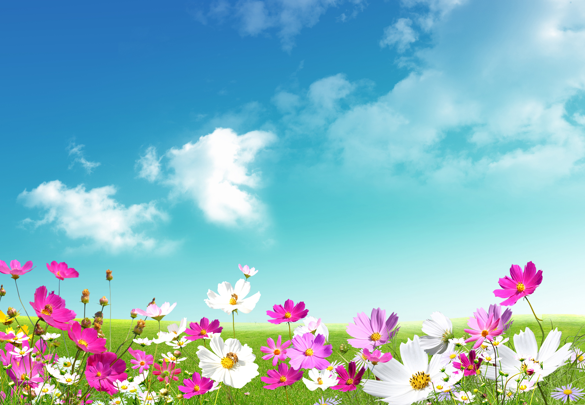 Spring Wallpaper Free Download.