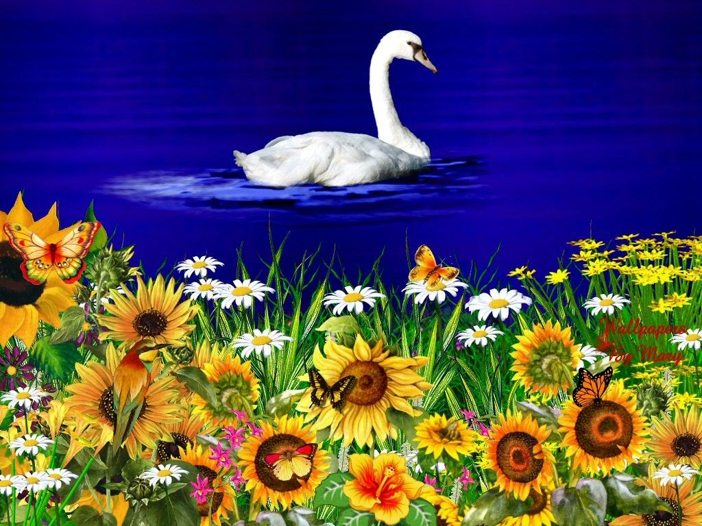 Download Free Flower Wallpapers.