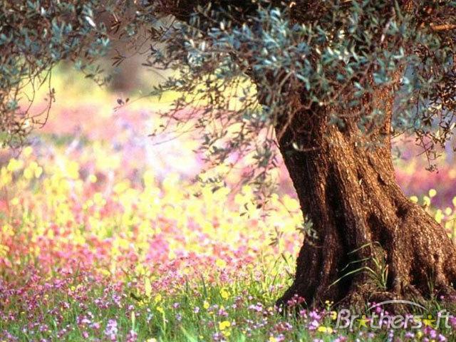 Download Free Free Blooming Spring Screensaver, Free Blooming.