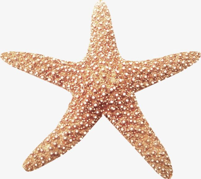 A Starfish PNG, Clipart, A Clipart, Coastal, Lovely, Star, Starfish.