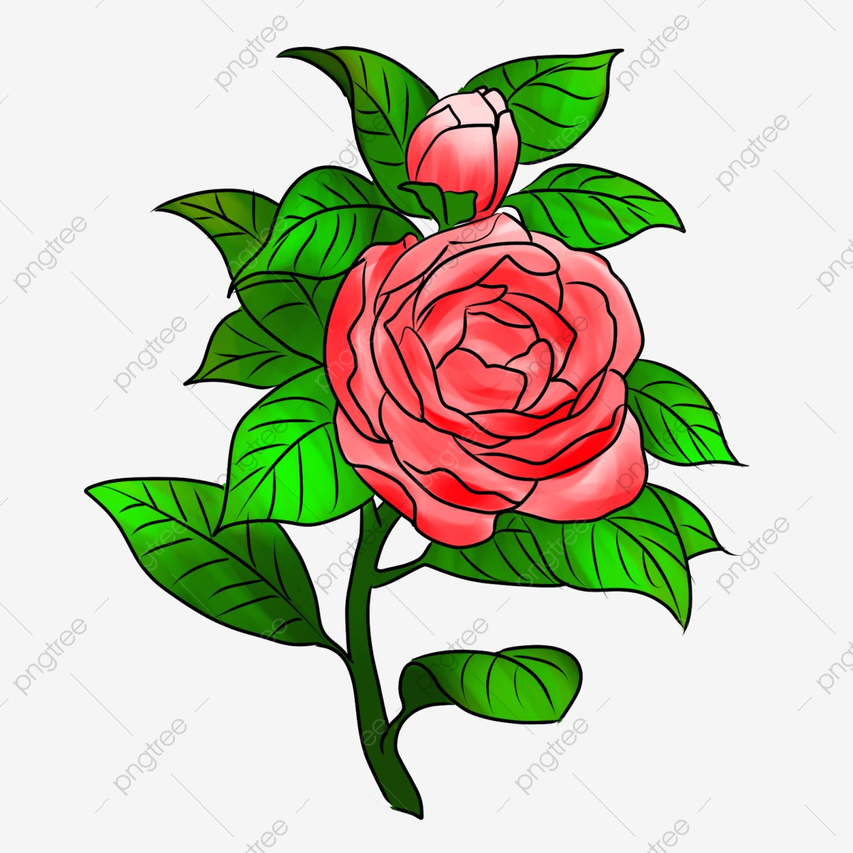 Rose Flowers Buckle Free Stock Photos, Rose Clipart, Rose, Flower.