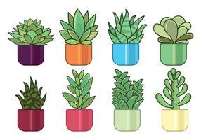 Succulent Free Vector Art.