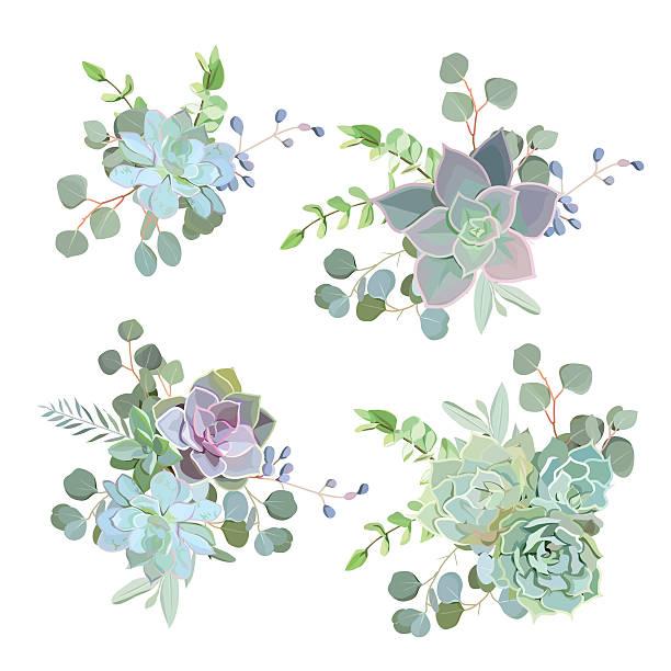 Best Succulent Plant Illustrations, Royalty.