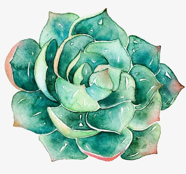 Succulents PNG clipart.
