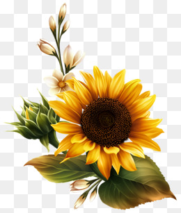Sunflower Clipart Images, 435 PNG Format Clip Art For Free Download.