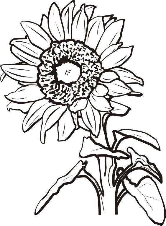 Sunflower Black And White Sunflower Clipart Black And White.