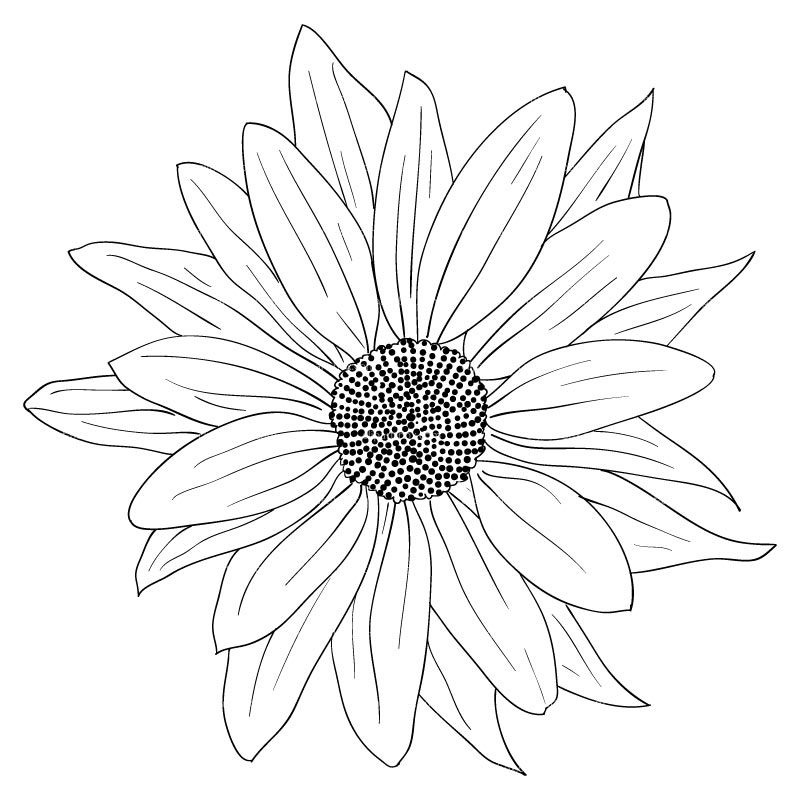 Black and White Sunflower Clipart, Free Black and White.