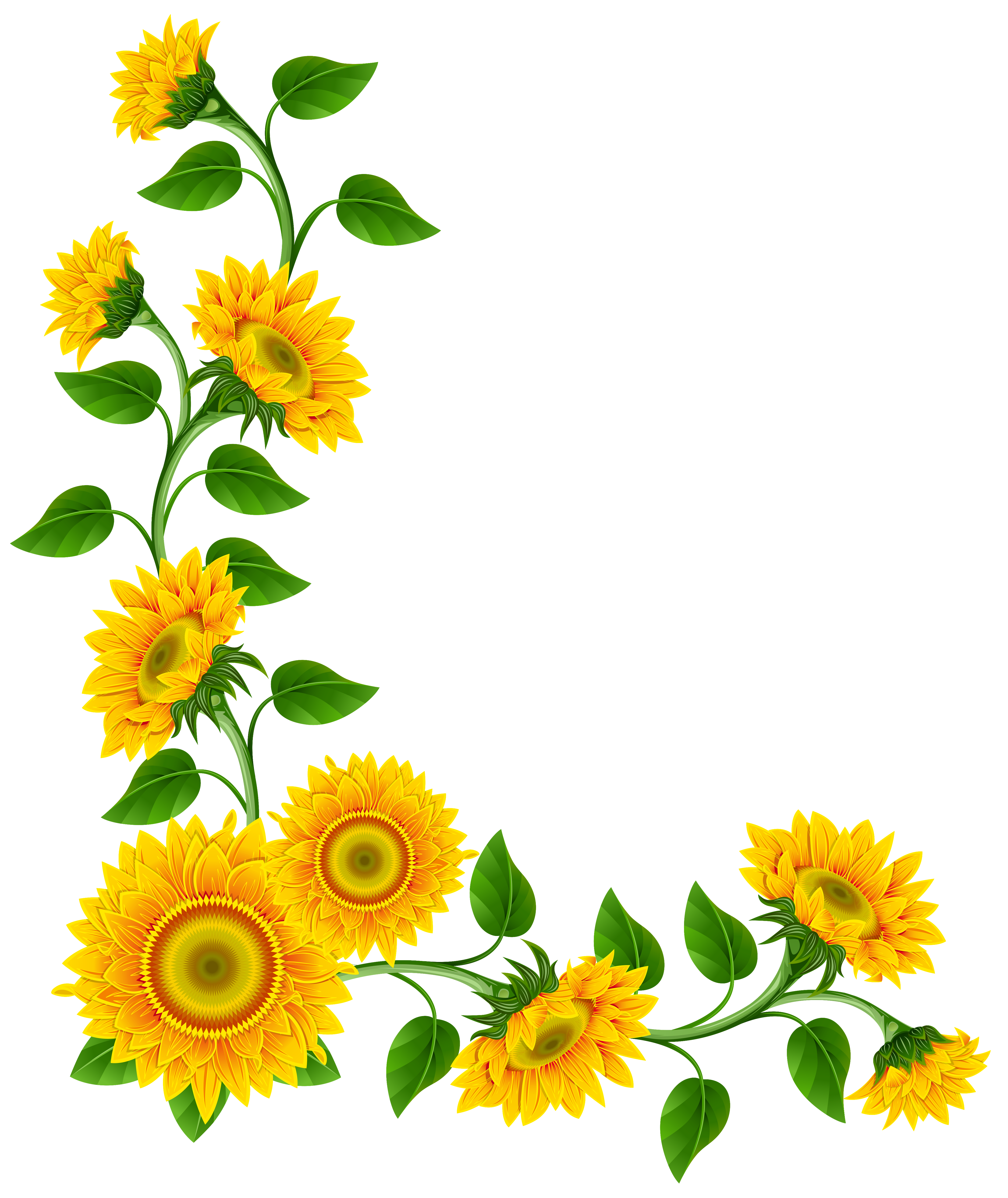 Free Sunflower Border Cliparts, Download Free Clip Art, Free Clip.