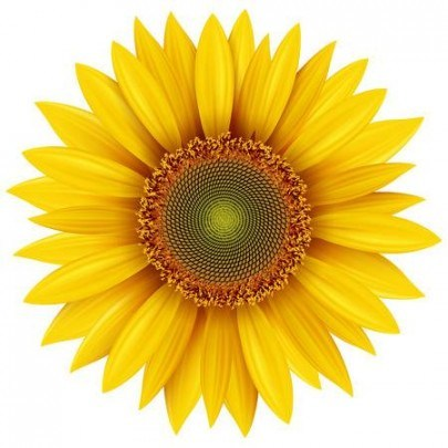 The Modern Rules Of Sunflower Clipart.