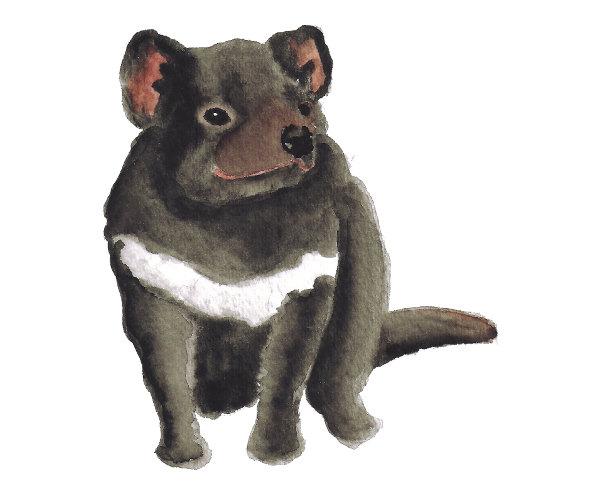 Free Tasmanian Devil Cliparts, Download Free Clip Art, Free Clip Art.
