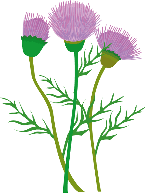 Free Thistle Cliparts, Download Free Clip Art, Free Clip Art.