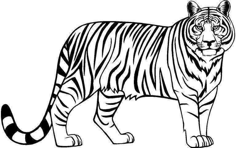 Tiger clipart black and white free 3 » Clipart Portal.
