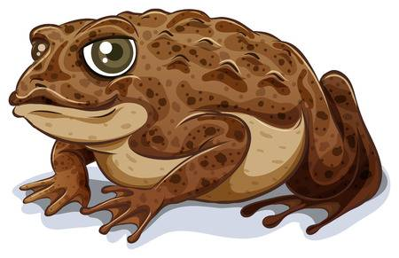 33,185 Toad Cliparts, Stock Vector And Royalty Free Toad Illustrations.