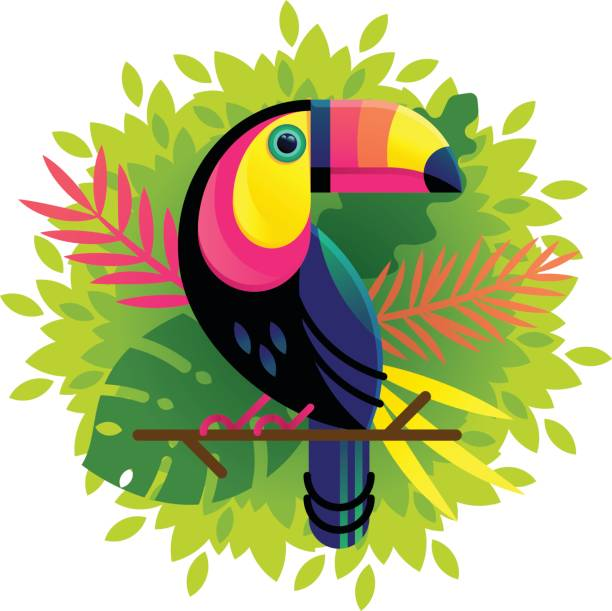 Best Toucan Illustrations, Royalty.